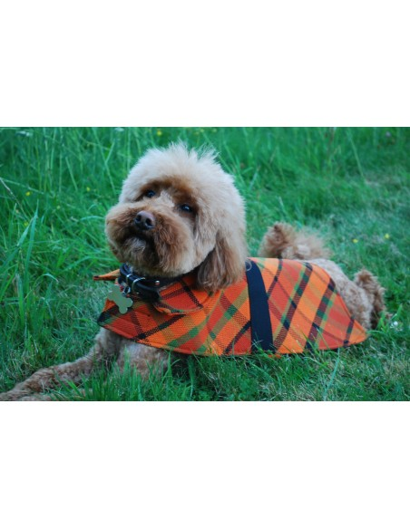 NLA Westfalia yellow plain material dog coat double sided with waterproof layer inside small